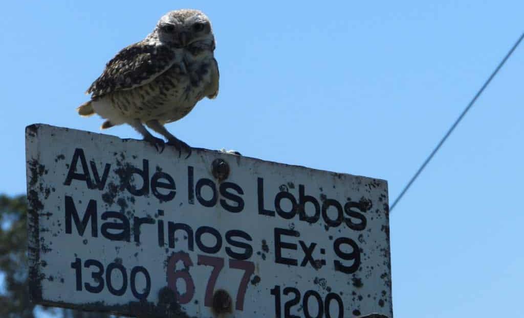 Fauna del Barrio Playa Los Lobos. Chapadmalal. Mar del Plata